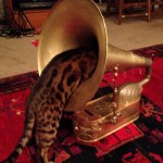 Кот инспектирует внутренности Grand iPhone Victrola